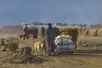 Men with Cape Cart, sled and draught animals on the sand road