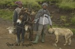Two Basotho herdboys with their donkey, sheep and dog, pause in the rain by the roadside.