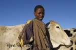 Mosotho with oxen