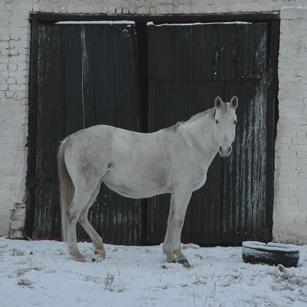 White horse in snow and black double doors