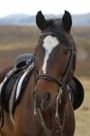 MAlutis on a Horse
